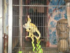Black-headea Squirrel Monkey20100618-4.JPG
