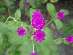 Flower20100821-2.JPG