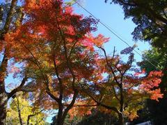 SashiroPark20101110-2.JPG