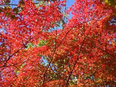 SashiroPark20101110-5.JPG