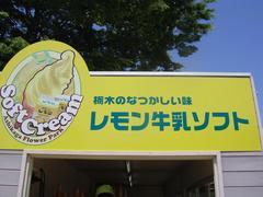 Soft ice cream2.JPG