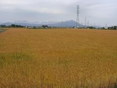 bakushu20100611-2.JPG