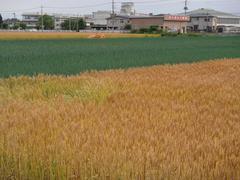 bakushu20100611-6.JPG