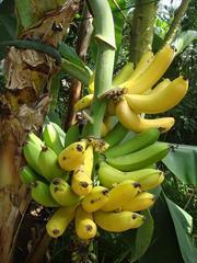 banana.JPG