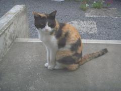 goku20100716-3.JPG