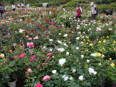 ibaraki-flowerpark2.JPG