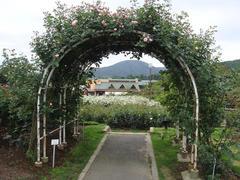 ibaraki-flowerpark5.JPG
