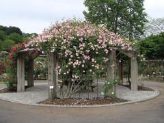 ibaraki-flowerpark7.JPG